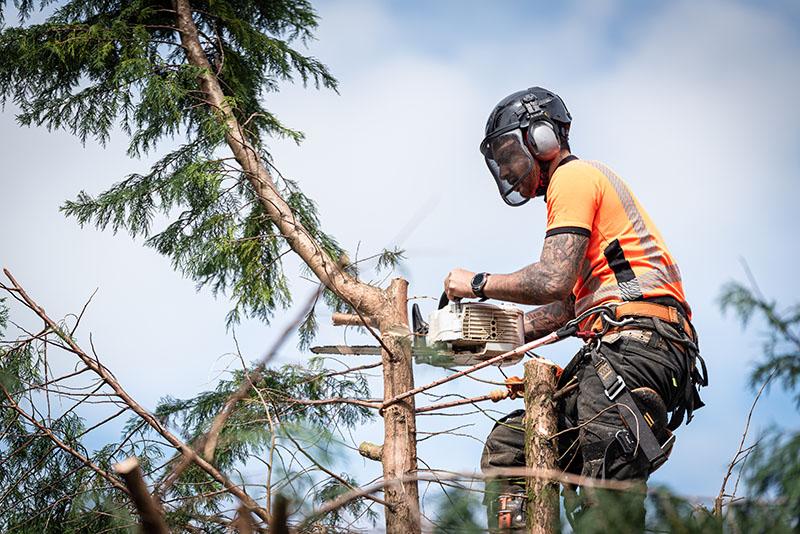 tree cutting service miami