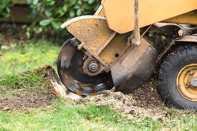 stump grinding miami
