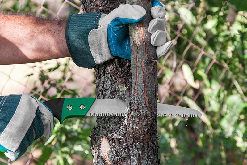 miami tree trimming